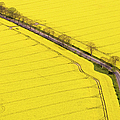 Rape Field Photographed From The Air by Willi Rolfes