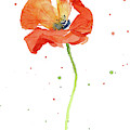 Red Poppy Flower by Olga Shvartsur
