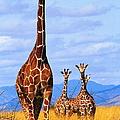 Reticulated Giraffes Giraffa by Mitch Reardon