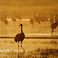 Sandhill Crane Silhouette by Nicole Young