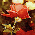 Single Rose Bloom In Gothic by Kirt Tisdale