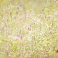 Summer Meadow by Jo Stephen