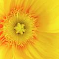 Sunshine by Patty Colabuono