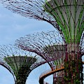 Supertrees And Ocbc Skyway At Gardens By The Bay Singapore by Imran Ahmed