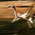 The Bird by Christine Sponchia