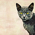 The Cat by Angela Doelling AD DESIGN Photo and PhotoArt