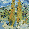 The Poplars At Saint Remy, 1889  by Vincent Van Gogh