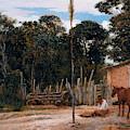 Tightening The Saddle by Almeida Junior