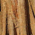 Tree Trunk And Bark Of Chambak by Steve Estvanik