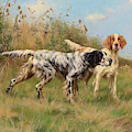 Two English Setters  by Thomas Blinks