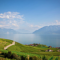 Vineyards Around Lake Leman by Onfokus