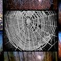 Web Of Life by Joyce Woodhouse