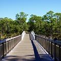 Western Lake Bridge by Megan Cohen