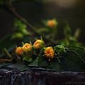 Wildflower Bouquet  by Brenda Wilcox aka Wildeyed n Wicked