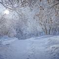 Winter Wonderland by Susan Rydberg