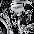 1949 Triumph Tiger Monochrome by Tim Gainey