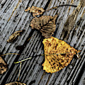 Autumn by William Norton