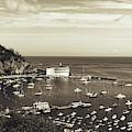 Avalon Harbor - Catalina Island, California by Mountain Dreams