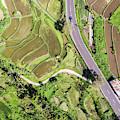 Bali Rice Paddies by Didier Marti