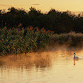 Beautiful Dawn Landscape Image Of River Thames At Lechlade-on-th by Matthew Gibson