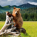Brown Bear, Lake Clark National Park by Mint Images/ Art Wolfe