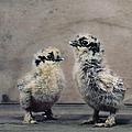 2 Chicks by Muriel De Seze