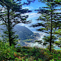 Forested Slopes Of Cape Perpetua  by Steve Estvanik