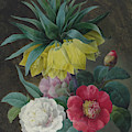 Four Peonies And A Crown Imperial  by Pierre-Joseph Redoute