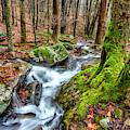 Little Laurel Branch Waterfall by Thomas R Fletcher