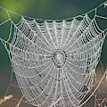 Marsh Spider Web by Carol Groenen