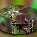 Northern Mockingbird by Robert L Jackson