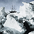 Shackleton Expedition by Granger