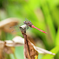 Small Beautiful Dragonfly by Rob D Imagery