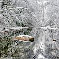 Snow Along Cranberry River by Thomas R Fletcher