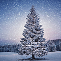Winter Tree by Borchee