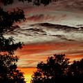Backyard Sunset by Linda Cupps