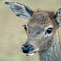 Deer by Rob D Imagery
