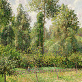 Poplars  Eragny  by Camille Pissarro