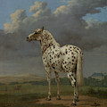 The Piebald Horse by Paulus Potter