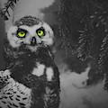 Winter Owl by Pixabay