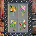 Orchids Antique Quadro Weathered Plank Rusty Metal by Baptiste Posters