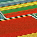 Bulb Region With Blooming Tulips by Hollandluchtfoto