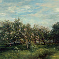 Apple Blossoms  by Charles Francois Daubigny