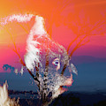 Australian Koala by Rob D Imagery