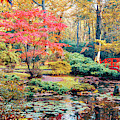 autumn in Japanese park by Ariadna De Raadt