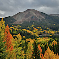 Red Mountain Pass Aspens by Ray Mathis
