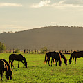 Horse In A Countryside by Rob D Imagery