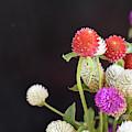 7191-multicolor by Elvira Ladocki