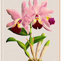 Orchid Vintage Print On Colored Paperboard by Baptiste Posters