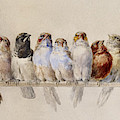 A Perch Of Birds by Hector Giacomelli